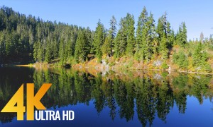 4K Fascinating Forest Lake - Autumn Forest with Bird Singing - 1 HR