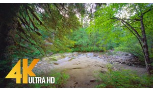 Franklin Falls Trail, Washington State, USA - 4K Virtual Forest Walk