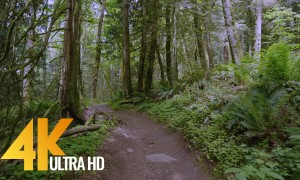 4K Virtual Forest Walk - Walking in the Woods, Grand Ridge Trail, Issaquah, WA