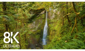 Waterfalls of the Olympic National Park: Marymere Falls. Part 2 - 8K/8K HDR Nature Soundscape Video - 8 HRS