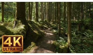 4K Virtual Walk along Middle Fork Trail at Snoqualmie Region - 3 HRS