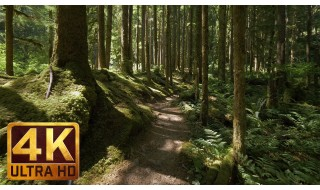 4K Virtual Walk along Middle Fork Trail at Snoqualmie Region. Part 1 - 3 HRS