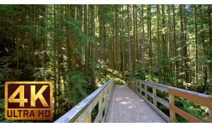 4K Virtual Hike in the Forest - Middle Fork Trail, Snoqualmie region. Part 3