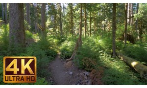 4K Virtual Walk along Middle Fork Trail at Snoqualmie Region in 3 parts - 9 HRS