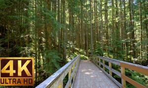 Ultra HD Virtual Hike in the Forest - Middle Fork Trail/Part 2 - Snoqualmie region - 3.5 HRS