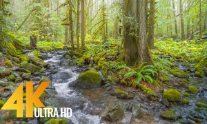 Rainy Day in the Forest: Nooksack Falls and Wells Creek, Washington State, USA