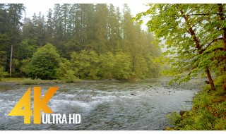 4K Relaxing River Scenery - Olympic National Park - 10BIT Color Video with Calming Water Sounds