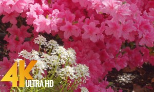 Summer Day in a Beautiful Flower Garden - 4K Relaxation Video with Birds Chirping - 4 HOURS