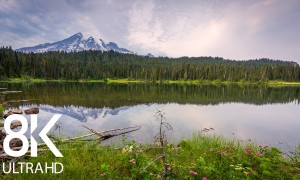 8HRS of Birds Songs and Mountain Lake Sounds - 8K/8K HDR Summer Day at Reflection Lake, Mount Rainier Area