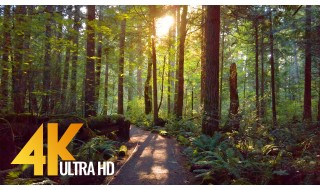 4K Virtual Walk along Tradition Lake Loop Trail, Issaquah, WA
