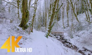 4K Virtual Hike Relaxation – Walking in a Snow Forest – 3.5 HRS