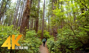 4K/4K HDR Walking Tour through Olympic National Park - 4K 10Bit Color