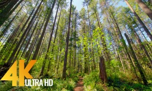Hiking Around the Lake Trail, Tiger Mountain Area, WA - 4K Virtual Forest Walk with Birds Chirping