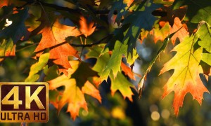 4K Nature Relaxation Video - Autumn Palette in 4K with relaxing piano music- 2,5 HOURS