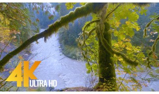 Autumn River. Part 2 - Fantastic 4K/4K HDR Soothing River & Forest Views in Fall (with Nature Sounds)