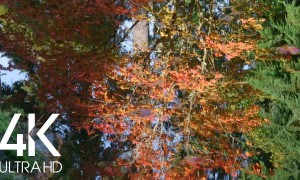Autumn Reflection in the Water - 8 Hours Relaxing Water Sounds & Birds Signing - 4K Scenery Video