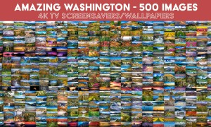 Amazing Washington 1-10 - 500 images