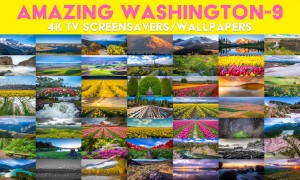 Amazing Washington 9