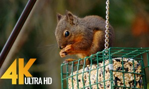 4K 10-bit Color Backyard Aminals - Wildlife Relax Video