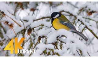 4K and 4K HDR Winter/Wildlife Relax Video - Birds in Winter - 2 HRS