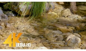 Crystal Clear Creek in 4K Ultra HD Relaxing Water Video - 3 HRS