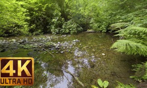 4K Nature Relax Video - Deep in the Forest - 1.5 HRS