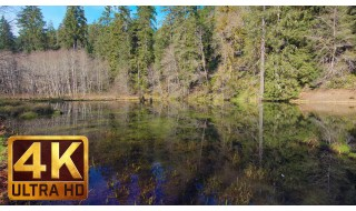 Ultra HD Lake Relaxation Video - Duck Pond - 1 HR