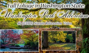 Fall Foliage in Washington State: Washington Park Arboretum, 4K/HD Nature Relaxation Video - 2.5 hours (3 Parts)