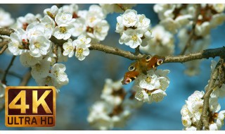 4K Relax Spring Flower Video: Flowers and Leaves. Episode 3 - 1.5 HRS