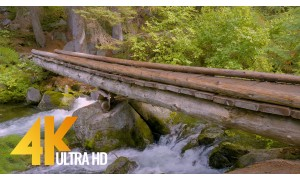Forest Bridge - 4K UHD Forest River Relax Video - 3 HRS