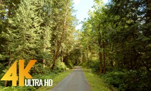 4K 10-bit color Virtual Hike Video - Snoqualmie Forest Walk, Washington State