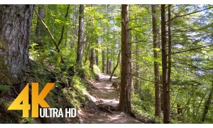 4K Forest Walk with Soothing Birds Singing - Rattlesnake Ledge Trail, WA State