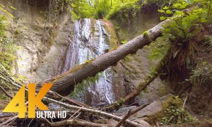 Coal Creek Natural Area, Newcastle, Washington State - 4K Waterfall Scene, Day Forest Hike