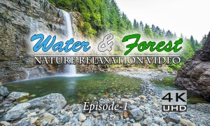 Water & Forest Episode 1, 4K/HD Nature Relaxation Video - 3 hours