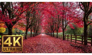 Soothing/Romantic/Ambient Piano Music with Fall Foliage Scenery - 3.5 HRS - Part 9