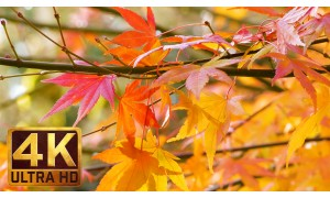 4K Autumn Nature Relaxation Video - Last Days of Fall. 3 Parts - 6 HRS