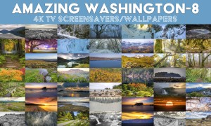 Amazing Washington 8