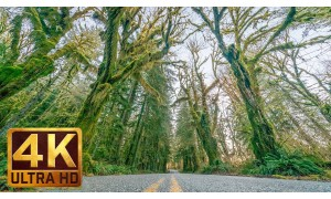 4K Driving Footage - Upper Hoh Road, Olympic Peninsula