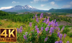4K Mountain/Flowers Relax Video with Nature Sounds - View from Hummocks Trail, Mt. St. Helens - 3 HRS