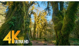4K Nature Relax Video: Hoh Rain Forest, Olympic National Park. Winter - Summer