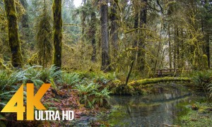 4K Super Long Relax Video with Nature Sounds - Stream in the Hoh Rain Forest - 10 HRS