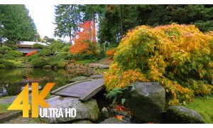 4KNature Relax Video - Fall Foliage. Episode 2