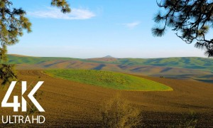 8 Hours of Relaxing Summer Birds' Chirping in the midst of Farm Fields - 4K Nature Soundscapes
