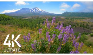 Relaxing Views of Mount St. Helens - 4K Super Long Nature Relax Video with Nature Sounds