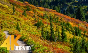 Autumn Foliage in Washington State - 4K Relaxation Video with Incredible Nature Sounds