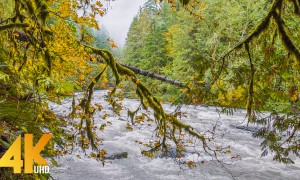 4K Amazing Nature Scenery & Singing Birds Ambience - North Fork Nooksack River, WA - 3 HOUR