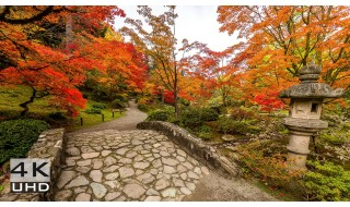 Japanese Garden, Autumn in 4k, Nature Relaxation Video - 1 hour