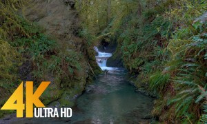 4K Super long nature sounds for relaxation - Loud Stream - 8 HRS