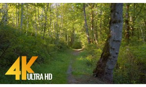 4K Virtual Forest Walk with Birds Singing in the Woods - Newcastle Highlands Trail - 2