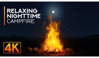 8HRS of Calming Campfire and Cicadas Sounds for Relaxation and Good Sleep - 4K Night Campfire